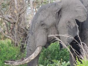 elephant-175926_960_720