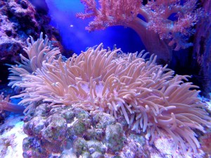 coral-1053834_960_720